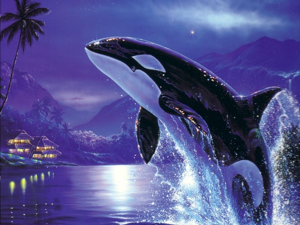 orca whale wallpaper iphone