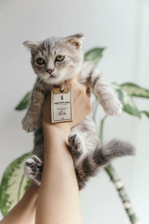 750 Cute Cat Pictures Download Free Images On Unsplash Cat Diseases Cat Has Fleas Kitten Images