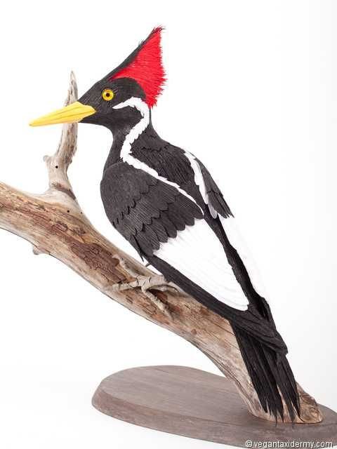 Ivory Billed Woodpecker Campephilus Principalis 3 D Crepe Paper Sculpture By Aimee Baldwin