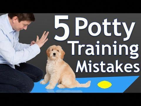 How to Stop Puppy Biting and Don't Do These 5 Things When