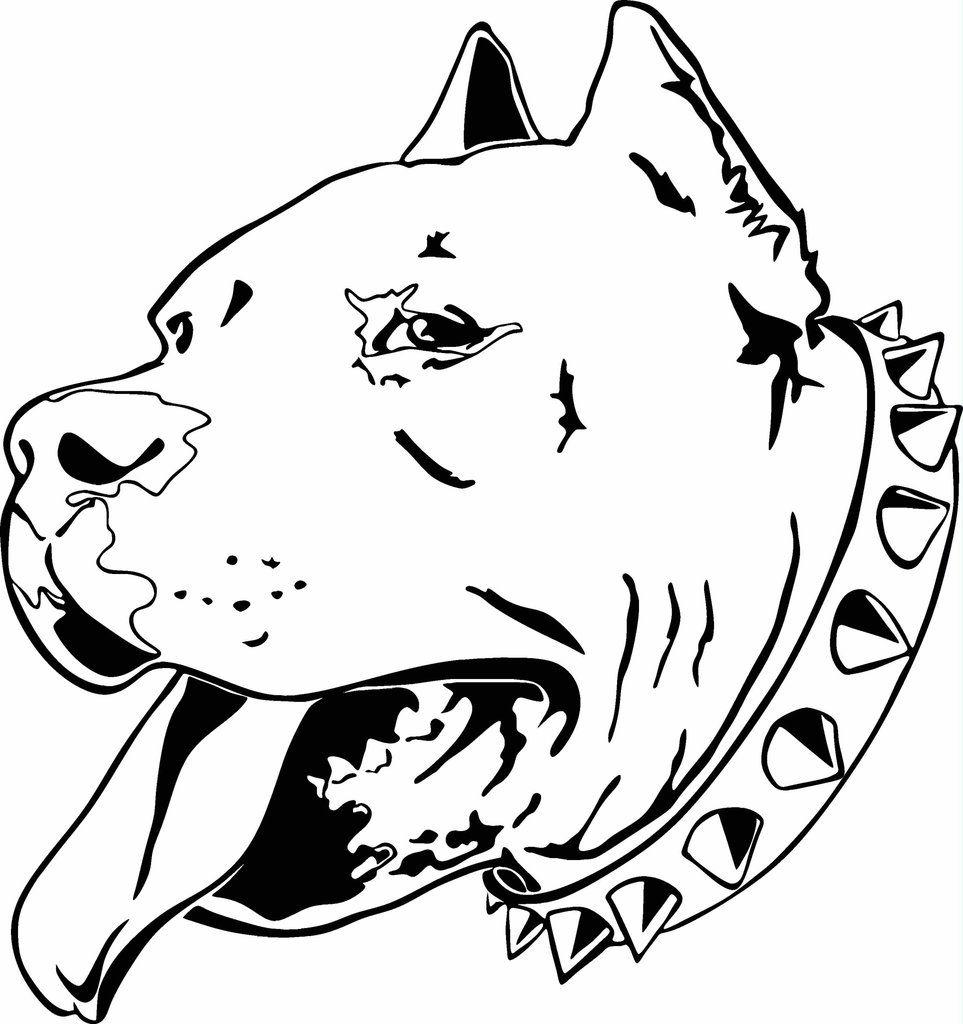 28 Collection Of Pitbull Drawings Dibujos De Pitbull Dibujo De