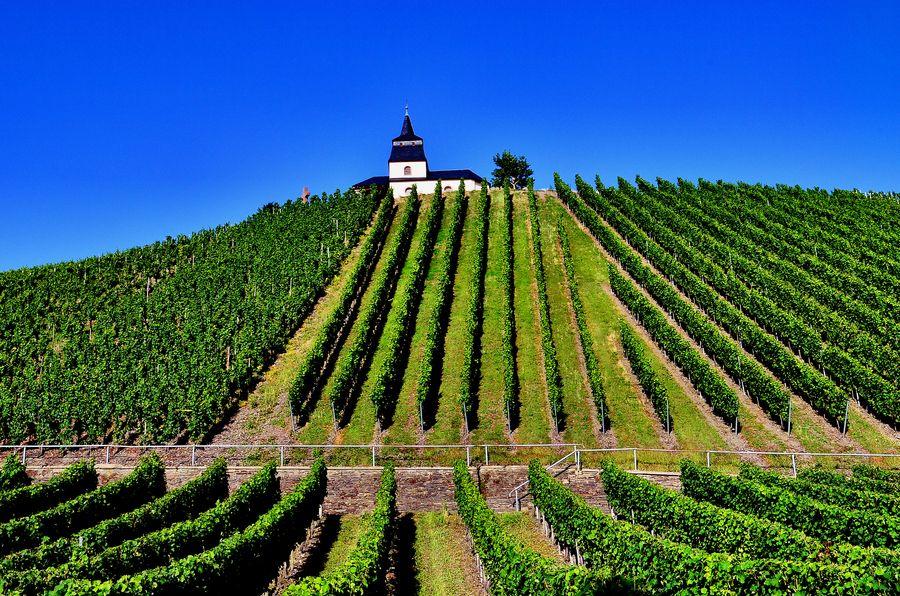 Vineyards Germany Www Romewithustravel Net Vineyards To