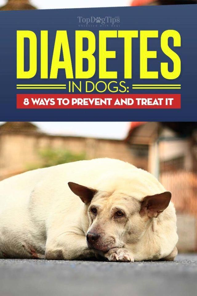 Diabetes in Dogs | Diabetic dog, Dog infographic, Cat ...