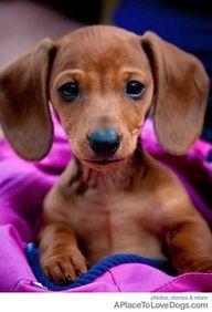 Look at those floppy ears!