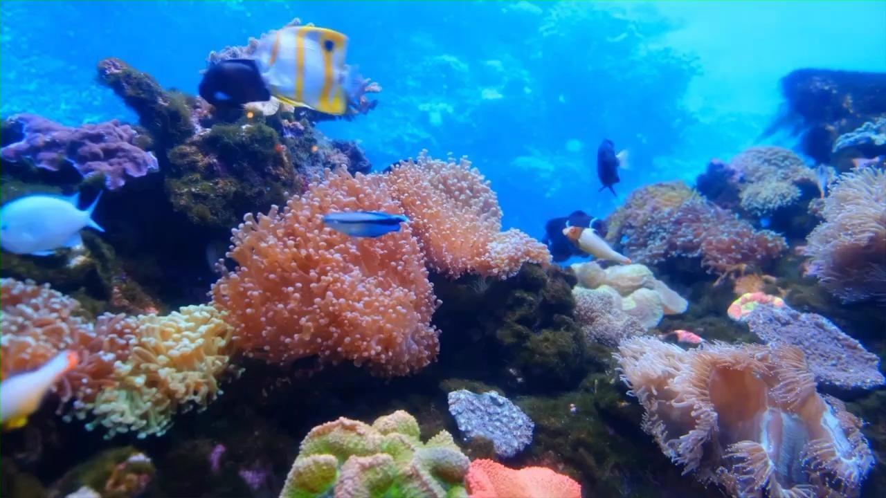 Zoom Background Video Fish Background Underwater Video Animation Background