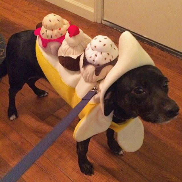 I Just Realized I Never Showed The Internet Laney S Halloween