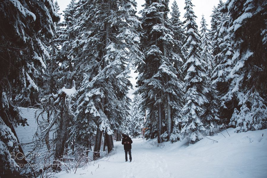 Searching for cabins - Pinned by Mak Khalaf Nature CanonNickcarneraPnwSnowWashingtonWinter by nickcarnera