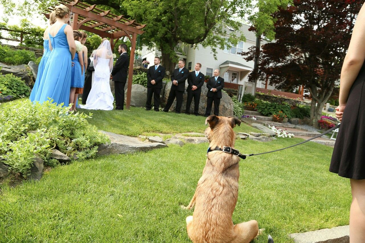 From the ring bearer's perspective...
