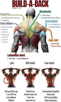 buildaback buildaback  workout program gym big back