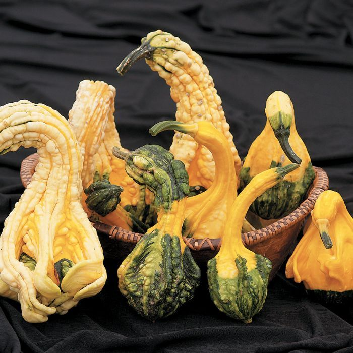 Autumn Wings Gourds Autumn Wings Gourds