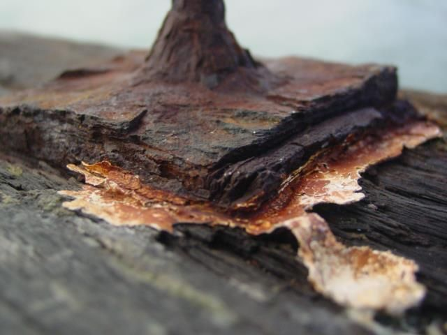 A rusted bolt on the wharf