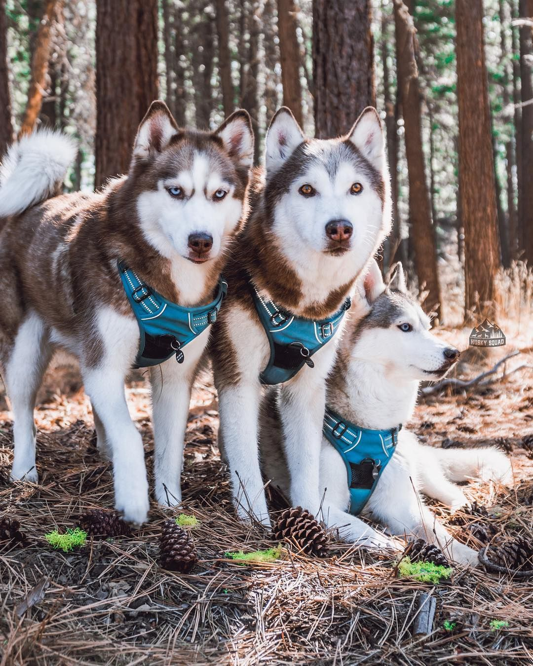 A Good Harness Saved Tiduss Life Read More Below And Watch The