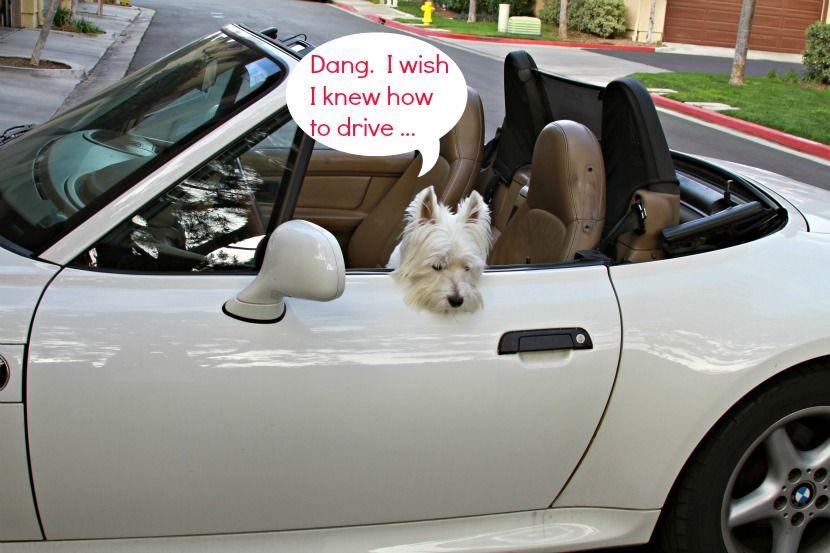 THE WHITE DOG BLOG -