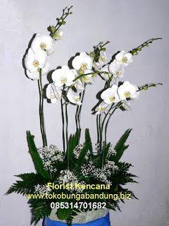 Rangkaian Bunga Anggrek Bulan Bandung Bunga Rangkaian Bunga Anggrek
