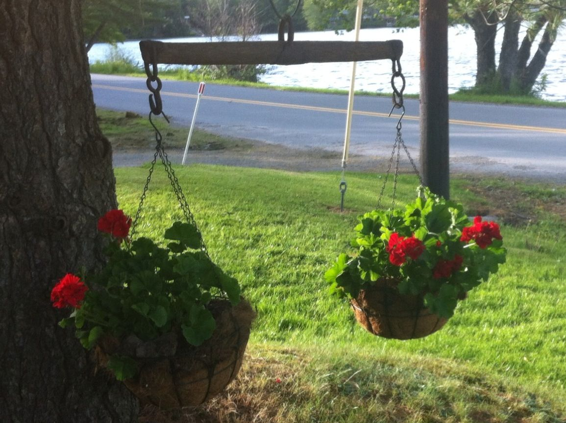 My parents made some whiffletrees into cool dual plant hangers ...