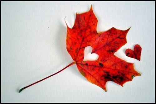 Canadian maple leaf love- Congrats to the Canadian Women's Curling and Hockey Teams!!! Go Canada Go!!!!