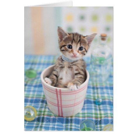 Munchkin Kitten With Pretty Ribbon Munchkin