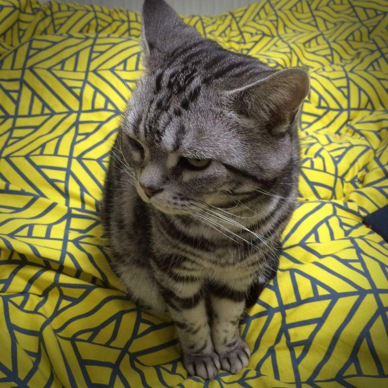 펫러브미 앱에 있는 카메라에 소리 기능으로 촬영해 봤는데 고양이 소리외에는 반응이 없네요.