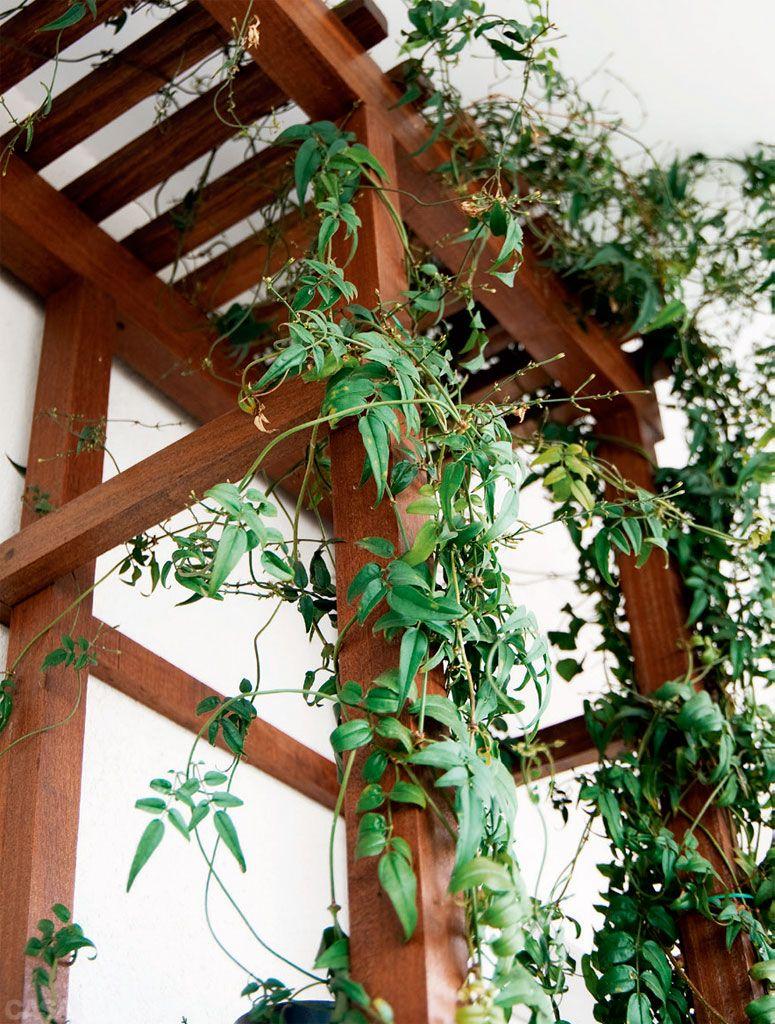 Na pérgula, a trepadeira jasmim-dos-poetas (Jasminumpolyanthum) demanda podas e tutoramento anuais, solo enriquecido e bem drenado para floradas de aroma suave.