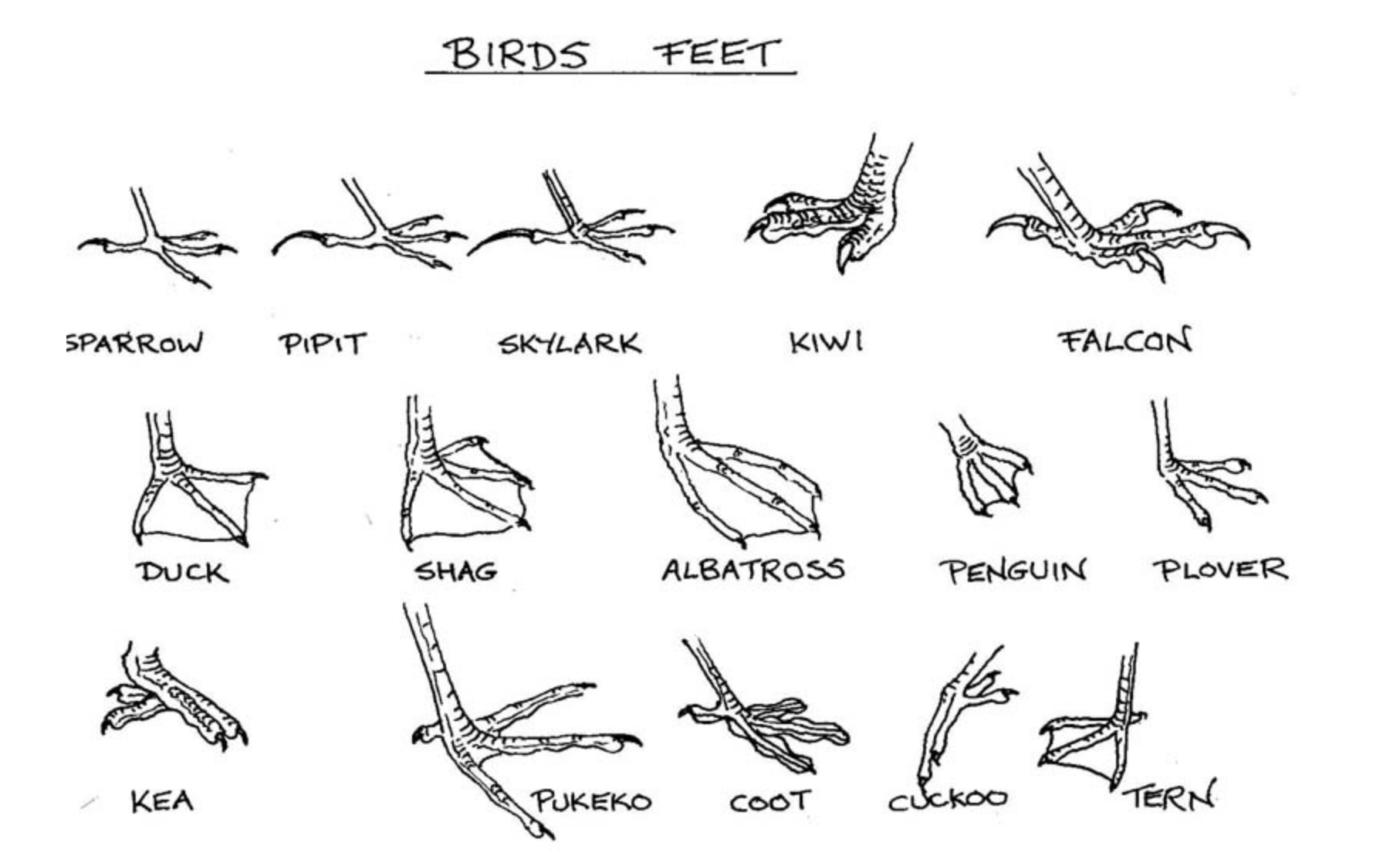 There Is Also Information About The Birds In The Pictures