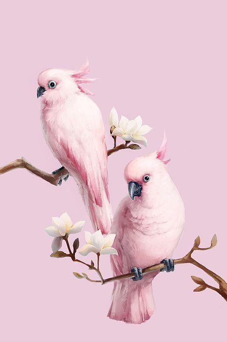 Cockatoos N Magnolia In Beijing Chiba Bird Wallpaper Animal Wallpaper Parrot Wallpaper