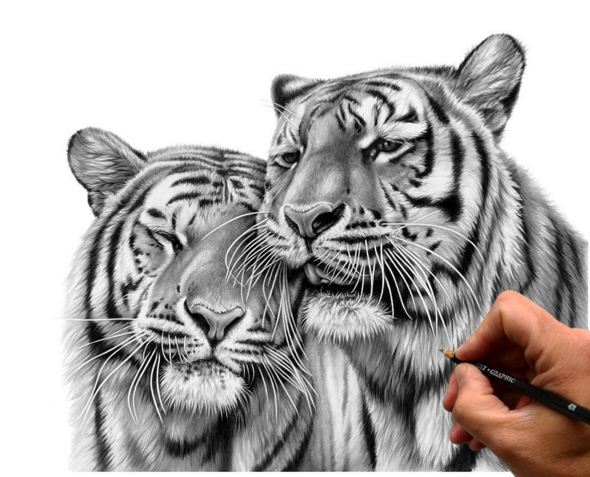 Richard Symonds Artist Richard Symonds Pinterest Drawings - Stunning drawings of endangered wild animals by richard symonds