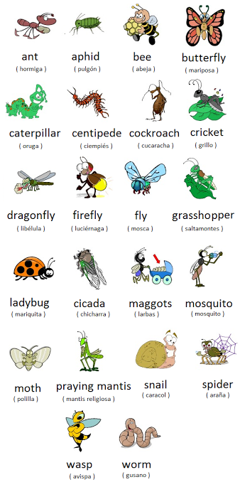 Memrise On English Vocabulary Learn English English Vocab