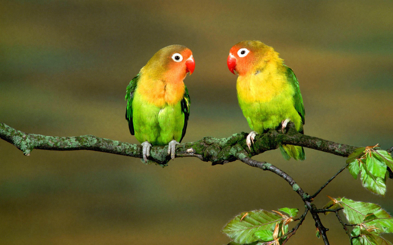 Pin Von Annagrace Kelly Auf Animals Hintergrund Vogel Vogelbilder Ausgestopftes Tier