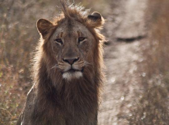 Volunteer in South Africa on an incredible wildlife