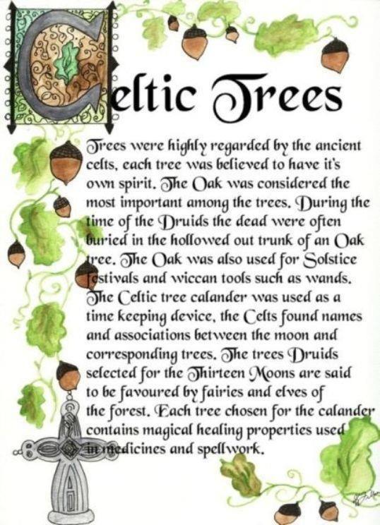 Celtic Tree Lore My Name In Irish Means Oak Trees Pinterest