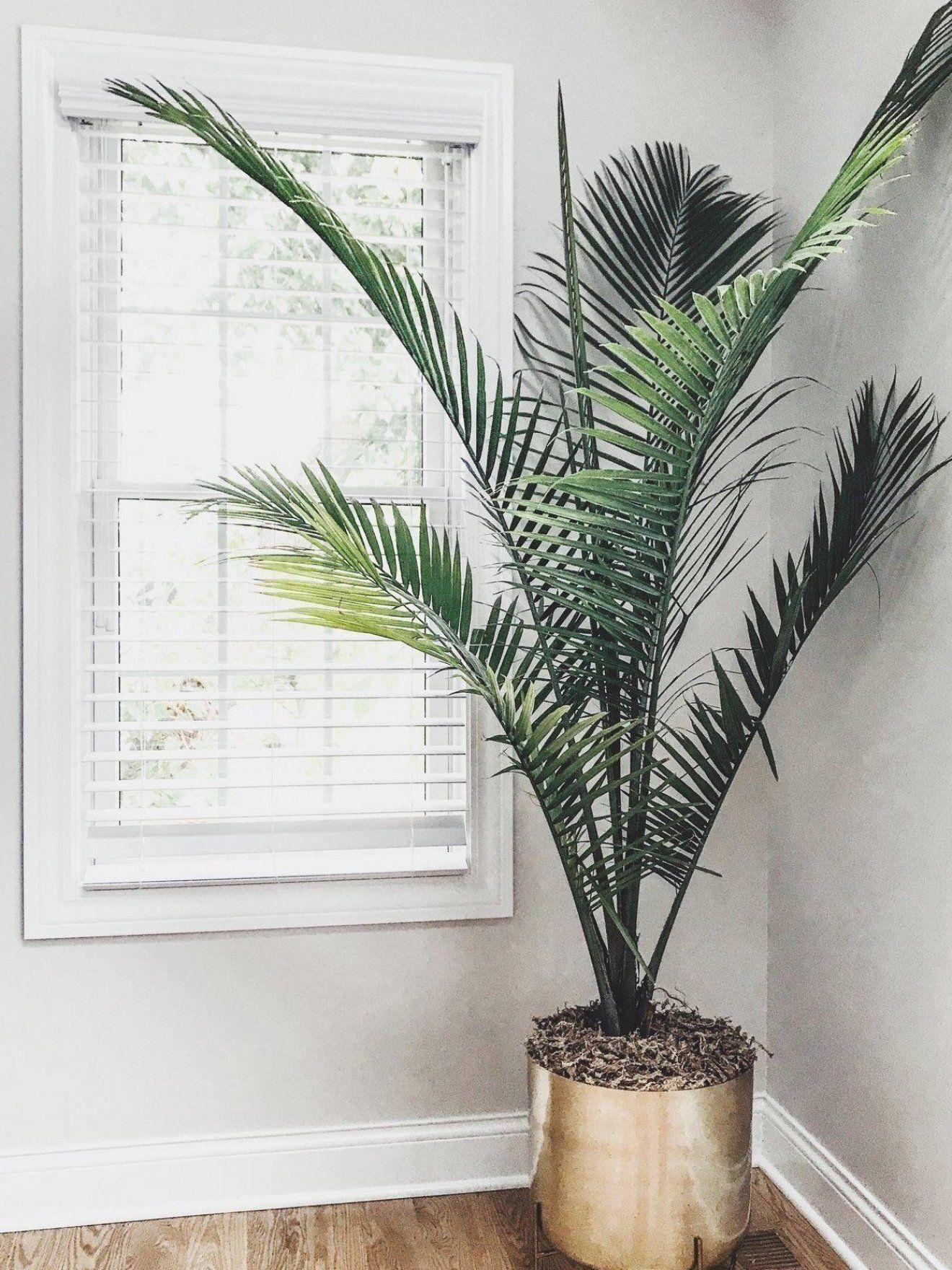 Pot De Fleur D Or Palmier Meilleures Plantes De Maison Meilleures Plantes De Maison Grands Palmiers House Plant Pots Large Flower Pots Plant Decor Indoor