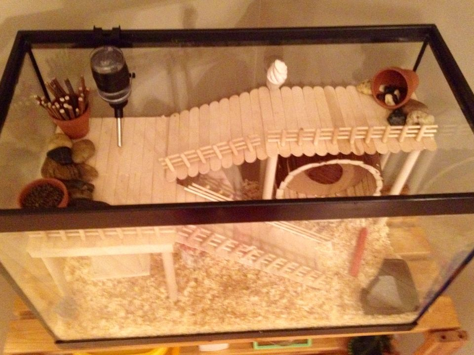 Hamster Cage Diy Aquarium Conversion Hamster Diy Diy Hamster