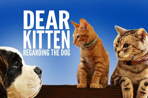 dear kitten regarding the dog cat dog and animal