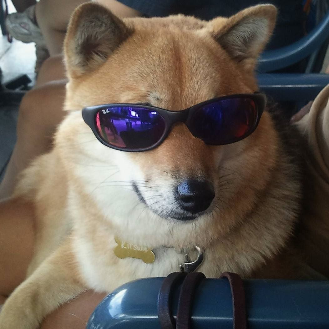My First Shiba Inu Puppy Home Page My First Shiba Inu Shiba Inu Shiba Inu Dog Shiba