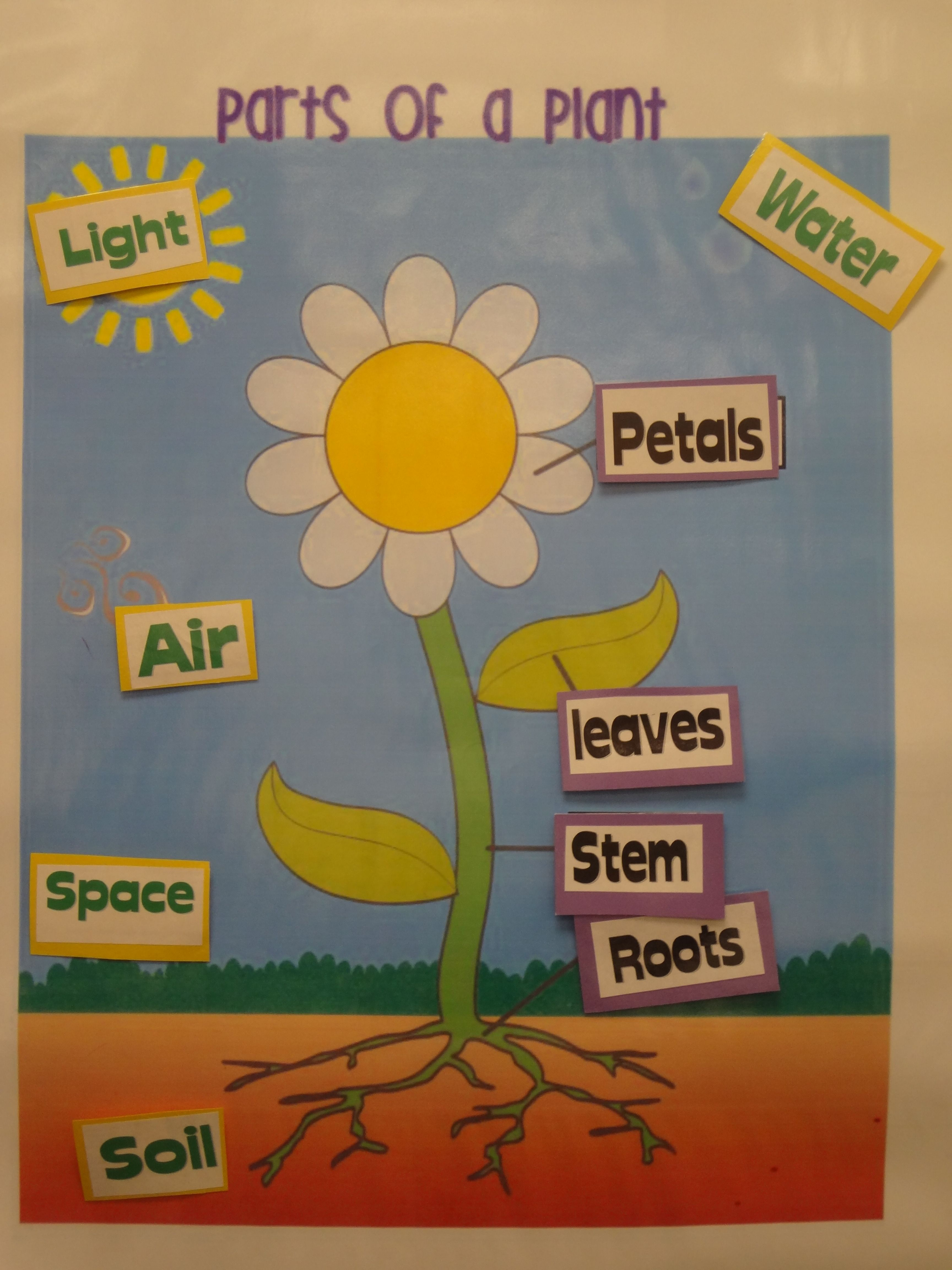 Plants Unit- Plant Parts Poster. Students