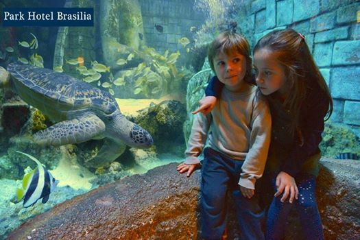 The SEA LIFE Aquarium has brought up a very important guest to Jesolo: a beautiful green sea turtle! Willing to meet it?  http://www.parkhotelbrasilia.com/