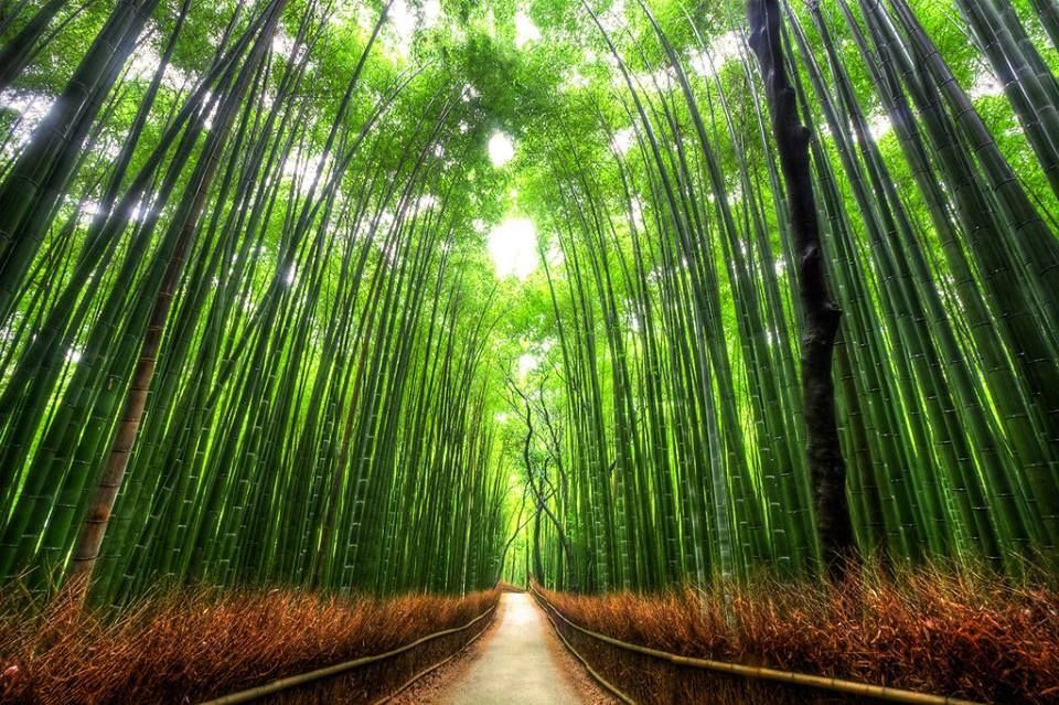 Kyoto bamboo forest way