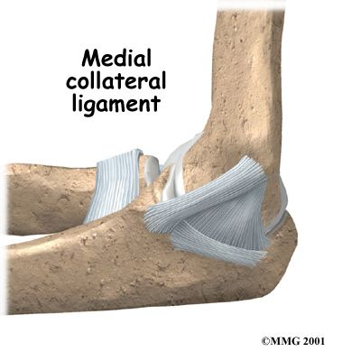 Medial collateral ligament of elbow, MCL of elbow, ulnar ...
