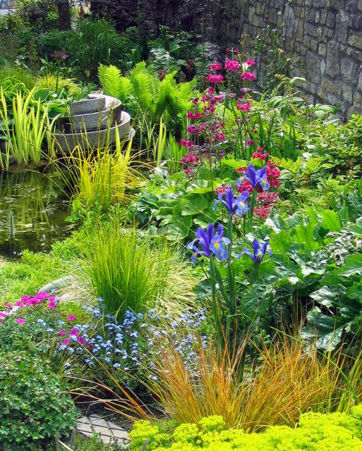 Wildlife Pond Surrounded By Pebbles: Wildlife Pond Surrounded By Moisture Loving Plants In