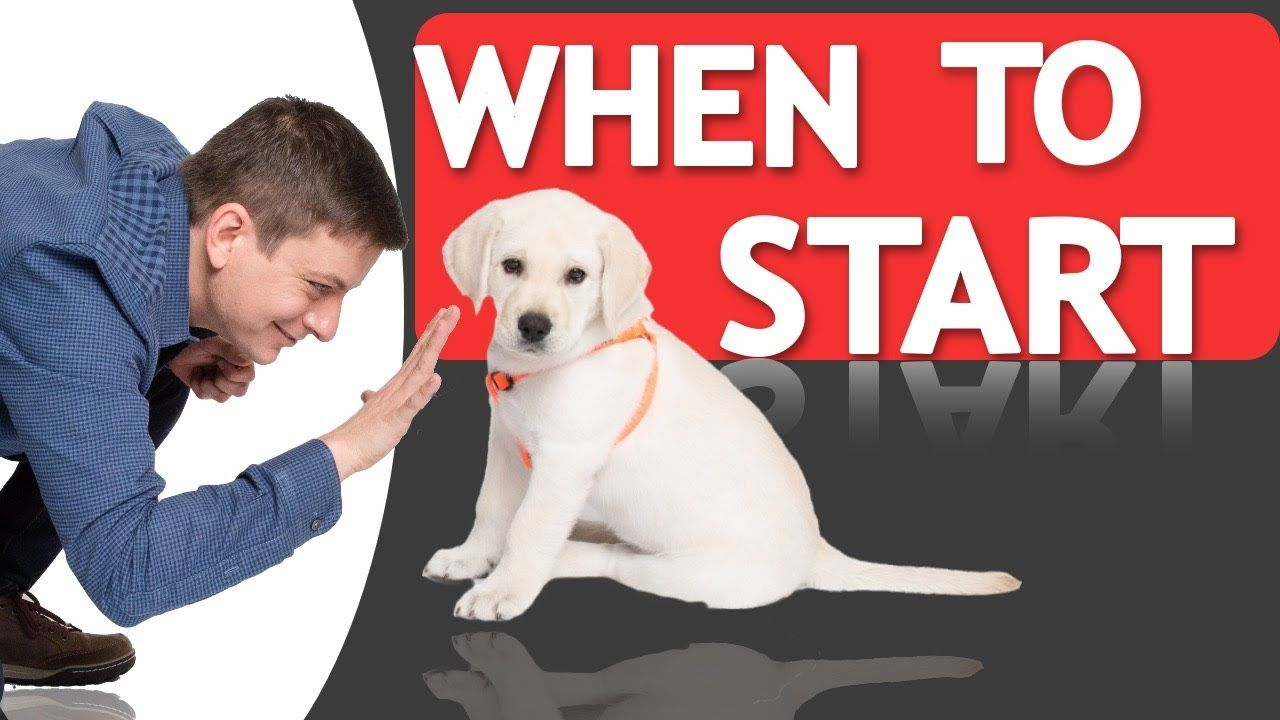 When Should You Start Training Your Dog Youtube Training Your