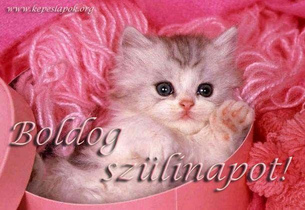 cicás szülinapi képeslapok cicás szülinapi köszöntők   Google keresés | Egyebek | Pinterest  cicás szülinapi képeslapok