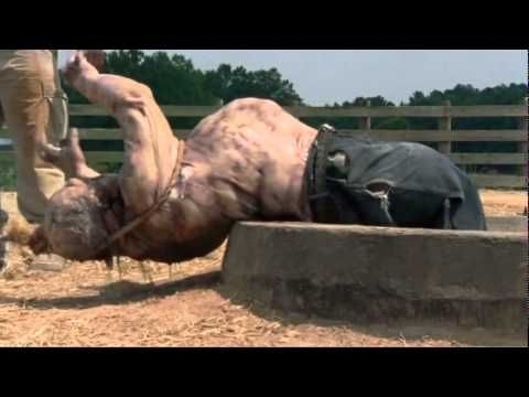 The Walking Dead Temporada 2 capitulo 4 (español latino) - http ...