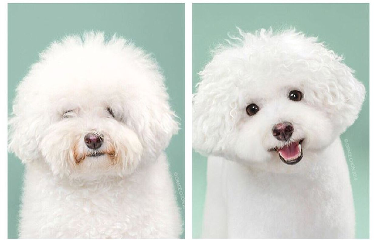 Learn The Basics Of Japanese Dog Grooming