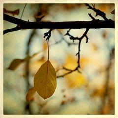 Pero el otoño golpeo nuestra puerta y como una hoja nuestro amor murió.