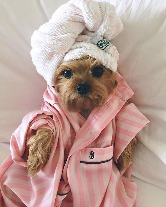 Some dog shampoos are designed for certain types of coats, and some are specifically for puppies.