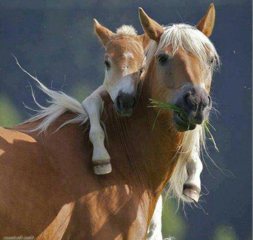 30 Süße Baby Tiere Sehen Sie Doch Nicht Niedlich Aus