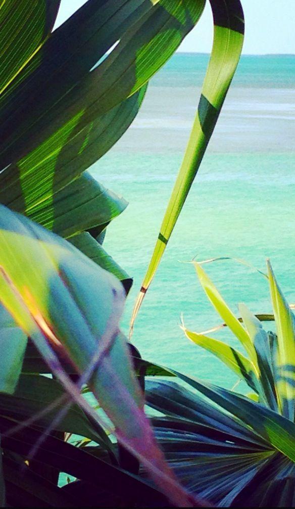 turquesas, verdes y azules en el paraíso