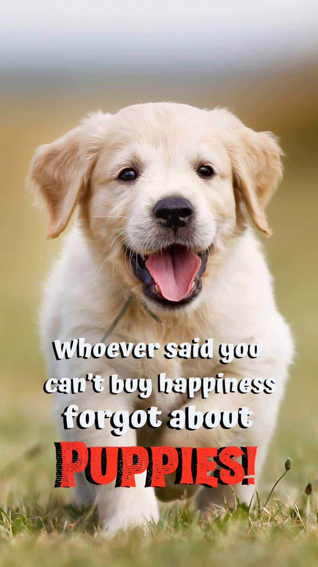 20 Free Dog Wallpapers I Phone And Android 20 Hd Sized Homescreen Wallpaper Dog Pictures Puppy Quotes Puppy Quotes Funny Cute Dog Quotes