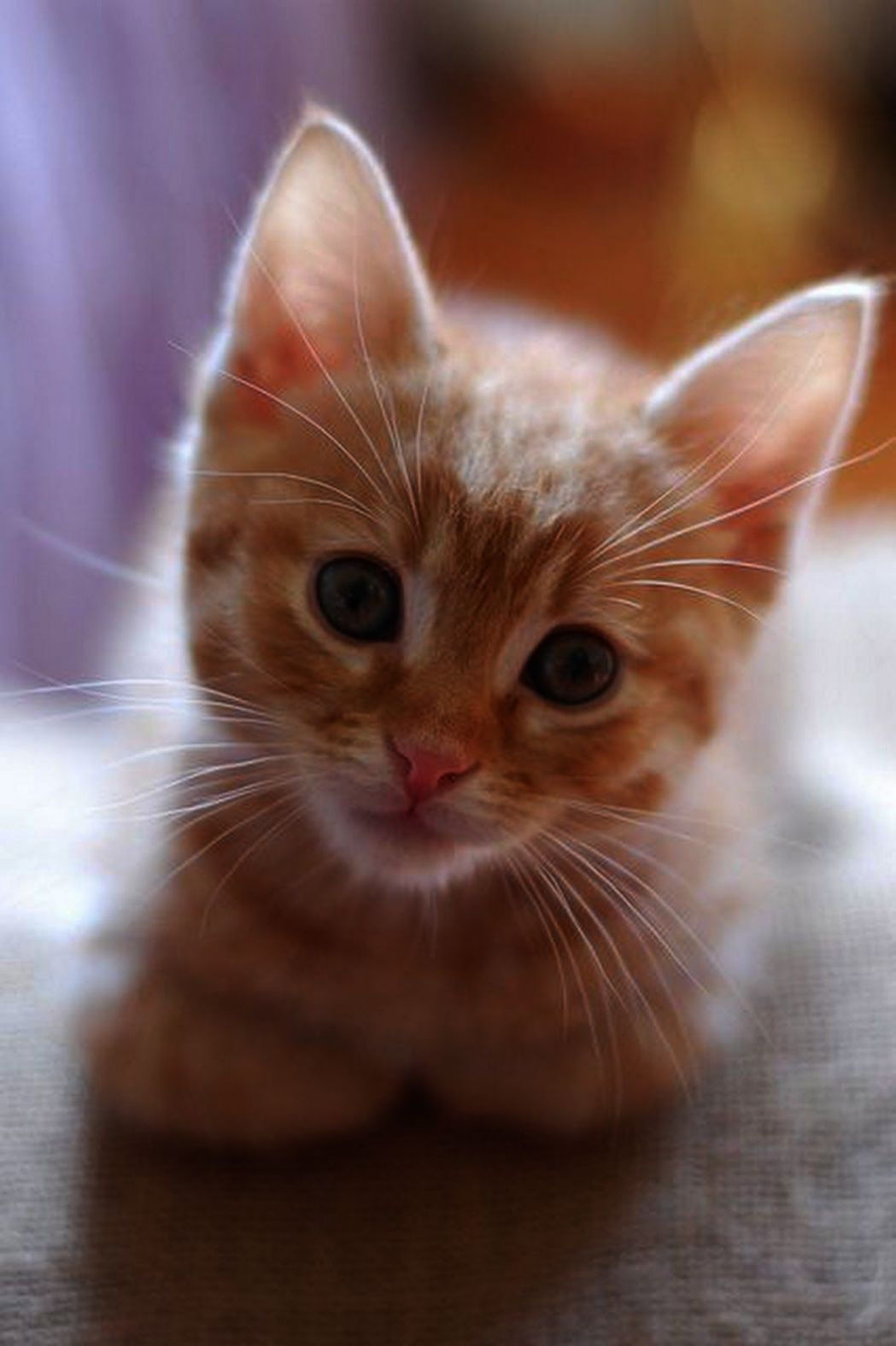 Cute Cats Cartoon Images Cute Newborn Kittens Meowing