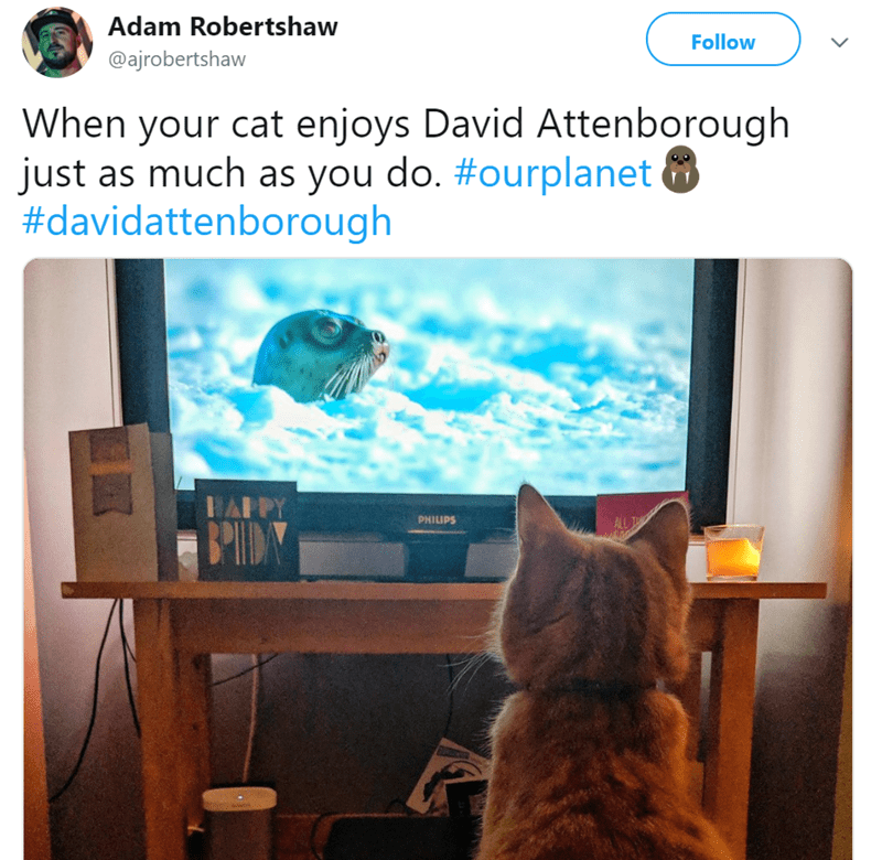 """15 Cats Who Just Can't Stop Watching The New """"Our"""